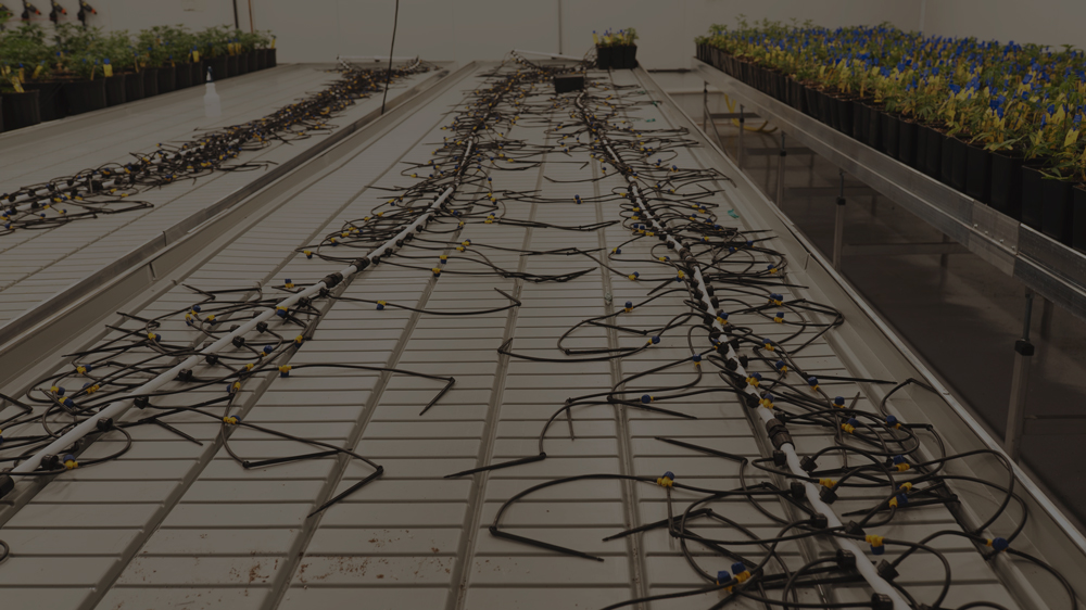 16mm black irrigation mainline. White drip stakes