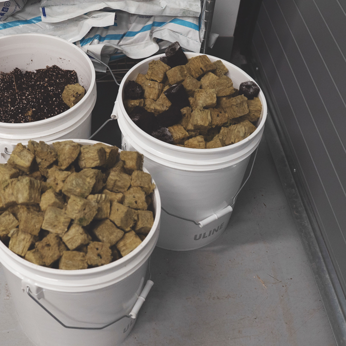 Containers filled with grow media